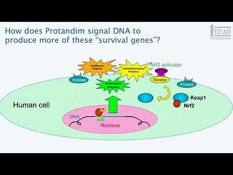 Protandim Science Update: Nutrigenomics and DNA Explained